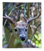White Tailed Buck Portrait Fleece Blanket
