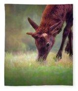 Young Elk Grazing Fleece Blanket