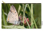 05 Balkan Copper Butterfly Carry-all Pouch