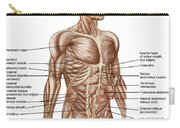 Anatomy Of Human Abdominal Muscles Carry-all Pouch