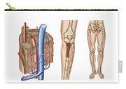 Anatomy Of Human Bone Marrow Carry-all Pouch