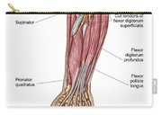 Anatomy Of Human Forearm Muscles, Deep Carry-all Pouch
