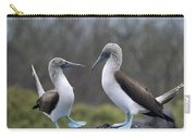 Blue-footed Boobies Courting Galapagos Carry-all Pouch