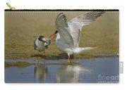 Common Tern Sterna Hirundo Carry-all Pouch by Eyal Bartov