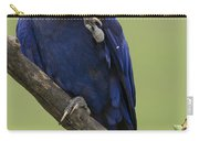 Hyacinth Macaw Eating Palm Nut Carry-all Pouch