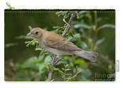 Indigo Bunting Hen Carry-all Pouch