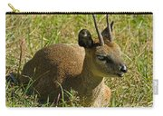 Klipspringer Antelope Carry-all Pouch