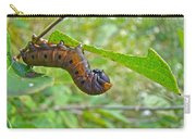 Snowberry Clearwing Hawk Moth Caterpillar - Hemaris Diffinis Carry-all Pouch