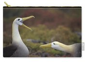 Waved Albatross Courtship Display Carry-all Pouch by Tui De Roy