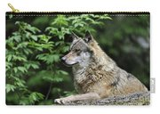 110613p024 Carry-all Pouch