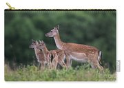 110613p158 Carry-all Pouch