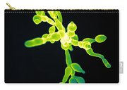 Candida, Sem Carry-all Pouch