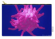 Actinomyces Carry-all Pouch