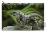 An Iguana Sunbathes In The Ancient Carry-all Pouch