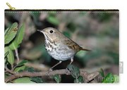 Hermit Thrush Carry-all Pouch