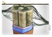 Spinal Cord Carry-all Pouch