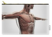 Anatomy Of Male Muscles In Upper Body Carry-all Pouch by Stocktrek Images