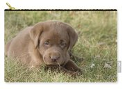 Chocolate Labrador Puppy Carry-all Pouch