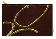 Streptococci, Sem Carry-all Pouch