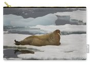 Walrus Resting On Ice Floe Carry-all Pouch