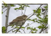 Graycheeked Thrush Carry-all Pouch