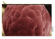 Zebra Fish Egg Carry-all Pouch