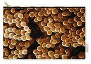 Staphylococcus Aureus, Sem Carry-all Pouch