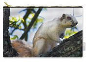 A Fox Squirrel Pauses Carry-all Pouch