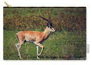 A Male Impala In Ngorongoro Crater. Tanzania Carry-all Pouch