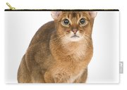 Abyssinian Cat Carry-all Pouch