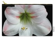 Amaryllis #2 Carry-all Pouch