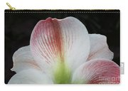 Amaryllis #3 Carry-all Pouch