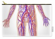 Anatomy Of Human Circulatory System Carry-all Pouch