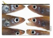 Arrangement Of Small Fish Smelt Carry-all Pouch