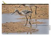 Baby Avocets At Grp Carry-all Pouch