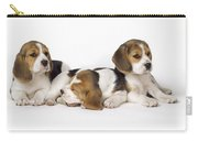 Beagle Puppies, Row Of Three, Second Carry-all Pouch