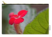 Episcia Flower Carry-all Pouch