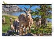Bighorn Sheep Of Lake Minnewanka Carry-all Pouch