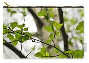 Birch Tree In Spring Carry-all Pouch by Elena Elisseeva