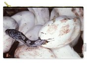 Black Rat Snake Carry-all Pouch