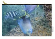 Blue Angelfish Feeding On Coral Carry-all Pouch