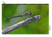 Blue Dragonfly 5 Carry-all Pouch