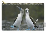 Blue Footed Booby Dancing Carry-all Pouch