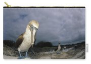 Blue-footed Booby Galapagos Islands Carry-all Pouch