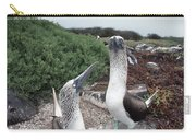 Blue-footed Booby Pair Courting Carry-all Pouch