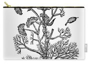 Botany: Giant Fennel, 1597 Carry-all Pouch