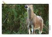 Buck In The Meadow Carry-all Pouch