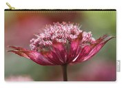 Botanica .. Candy Carry-all Pouch