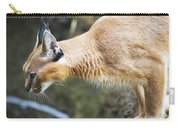 Caracal About To Jump Carry-all Pouch