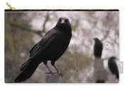 Cemetery Crows Carry-all Pouch